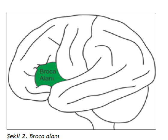 empati, taklit, ayna nöronlar, empatinin fizyolojik kökeni, taklitin fizyolojik kökeni