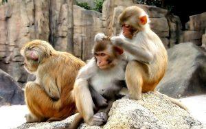 kıskançlık, evrim, darwin, kıskançlık ve evrim